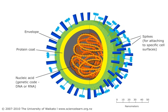 Virus generalised structure