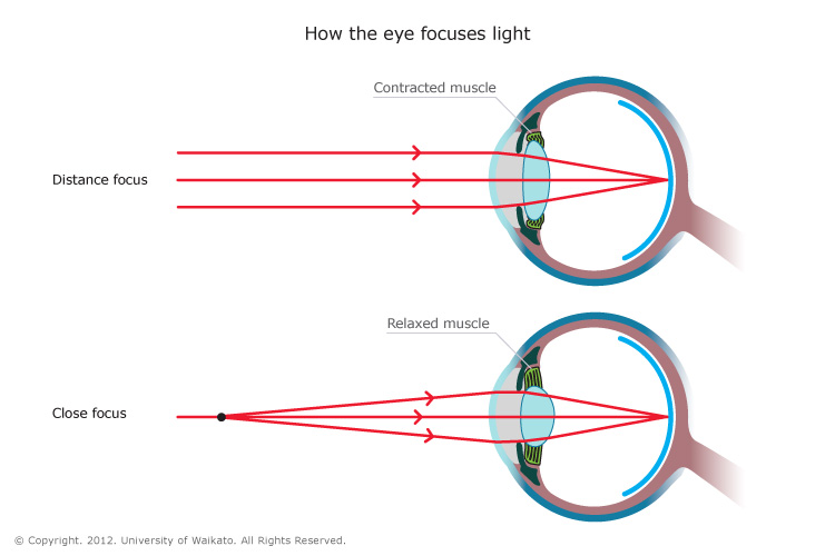 Eye Diagram Lens Focus Light - Electrical Drawing Wiring Diagram •