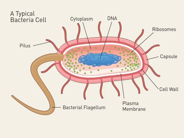 Bacteria pmg biology image image ccuart Choice Image