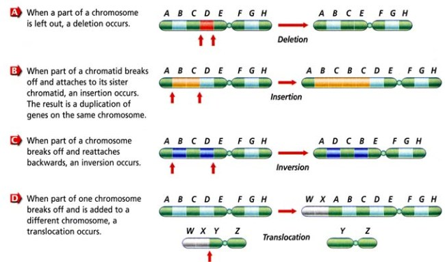 an understanding of mutation Understanding mechanisms of mutation this review will focus on the types, causes, and consequences of mutation types of mutation.
