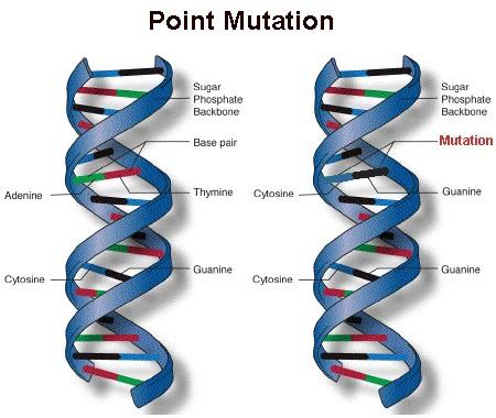 Mutation - Grade 9 Understanding for IGCSE Biology 3.34 3 ...