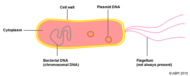 the components of a bacterial cell bacteria pmg biology