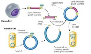 32 Recombinant DNA
