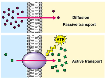 Easy active transport diagram electrical work wiring diagram active transport pmg biology rh pmgbiology com primary active transport diagram cell membrane diagram ccuart Image collections