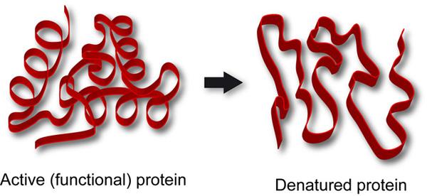 enzyme | PMG Biology