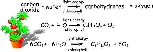 Factors affecting rates of photosynthesis a understanding for factors affecting rates of photosynthesis a understanding for igcse biology part 1 219 222 ccuart Gallery