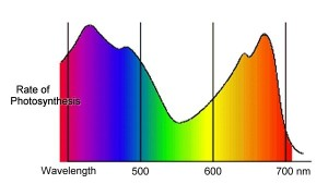 Spectrum of visible light and rates of photosynthesis