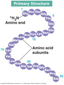 protein_-_primary_structure