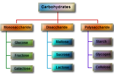 biological molecule of carbohydrates