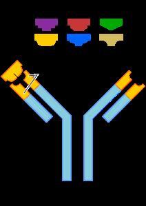 2000px-Antibody