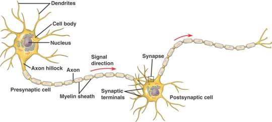 neuron_structure