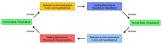 thermoregulation-2_med