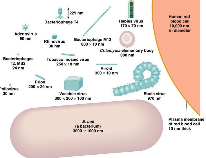Viruses A Understanding For IGCSE Biology 1 2 1 3 PMG Biology