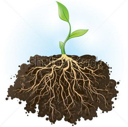 root   PMG Biology