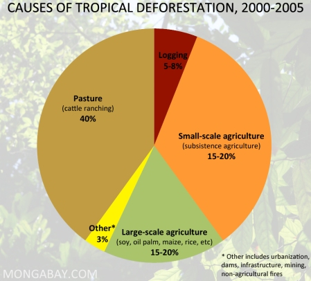 causes-of-tropical-deforestation