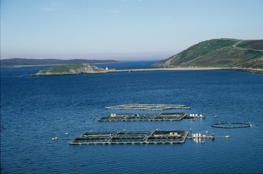 fish-farm-l-eriboll
