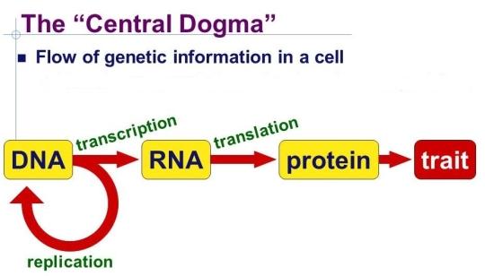 central-dogma.jpg